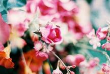 Gardens + Floral things ♥