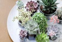 Succulents ♥