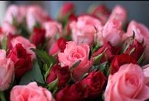 Florals / by Diane Ellen