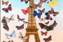 Butterflies / by Diane Ellen