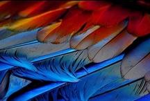 Feathers / by Diane Ellen