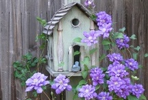 Bird Houses and Cages / by Diane Ellen