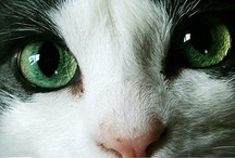 Cats: Up Close and Purr-sonal / by Diane Ellen