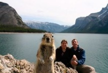 Banff National Park Critters / Banff National Park is home to many different species of wildlife. / by Sunshine Village
