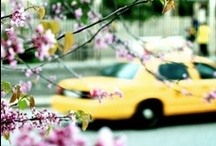 NYC: Big Yellow Taxi / by Diane Ellen