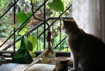 Cats: Looking Out, Looking In / by Diane Ellen