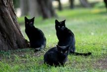 Cat Collections / by Diane Ellen