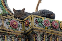 Cats Around the World / by Diane Ellen