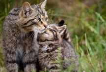 Cats and Their Kitties / by Diane Ellen