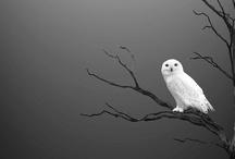o w l / OWLSS!!! My favorite animals! / by Sara Elene