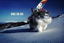Ride or Die / Ride or Die / by Sunshine Village