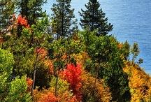 Images of Autumn / by Diane Ellen