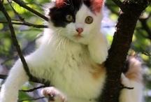 Cat-tastrophies / by Diane Ellen