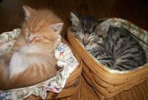 Basket Buddies / Tips and fun recipes for your furry friends and cuddly creatures.