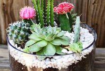 Plants & terrarium / Green, Life, Home decor, just plants and flowers