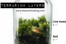 Terrarium diy / by Diane Cassidy Smith