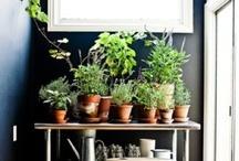 garden grow.  / by Jessica Reschke