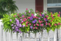 Love Window Boxes / Each spring I get excited about just what  flowers and combinations I will put together in my Window Boxes.  Love 'em. / by Rita Diffenauer
