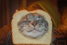 Cat Breading / by Alice Parker