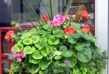 Gardening / Inspiration for a beautiful garden.