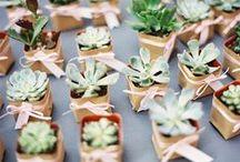 Succulents & Greenery
