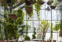 De Kas: kantoorstyling / De Kas; waar ideeën tot groei komen. Thema kantoorstyling. Theme officestyling: The Greenhouse, where ideas grow.
