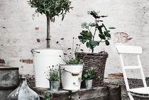 Outdoor Living / Inspiration