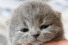 cute / 猫率が高いですが、私が独断と偏見でカワイイと思うものたちです。
