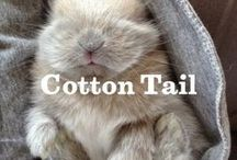 Cotton Tail / by Annie's Homegrown
