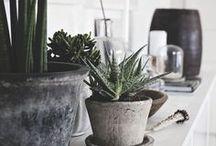Green plants / Greenery