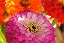 Flower love / by Sara Blackburn