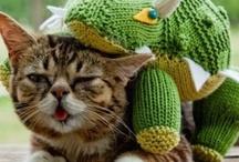 Awesome Animals / by Sheila Cruz-Green