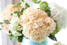 Heavenly Hydrangeas  / Hydrangea wedding bouquets, hydrangea wedding centerpieces, and hydrangea wedding cakes. We love the organic feel of this fluffy bloom.