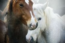Animal related / by Mandy Kirsch