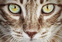 Cat world! / by Christy