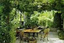 Gardens / by Sharon Carpenter