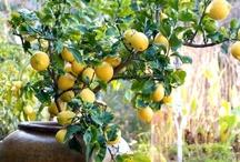 Garden Fresh / Just one more step towards becoming Mema Reda