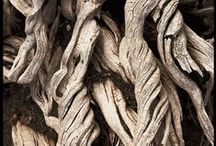 Inspiration - Beautiful Pieces of Wood