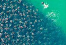 Море разное / Море как оно есть. Не злое, но равнодушное к людям.