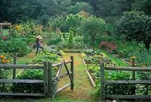 kitchen garden / vegetable and fruit gardening / by Laurel Rusakoff