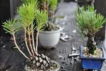 Flourishing Indoor Garden / Trying to get a greener thumb.