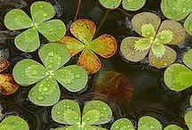 Luck of the Irish...
