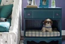 Favorite Dog Places & Spaces