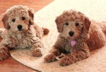 Puppy love / by Sarah Rabon