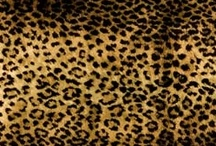 Everything Leopard / by Mary Jo Mohan