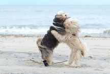 DOGGIES! / by Valery A