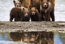 BEARS / by Barb Brunes