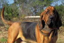 """Dog Breeds / While there are 157 registered dog breeds and over 5,000 thousand variations that are not registered, they are all dogs, man's best friend, and each one of them deserves a good home with a family that will love and care for them.  If you're looking for a dog for your home, don't get caught up in the whole """"pure breed"""" thing. Go to the pound and adopt a mutt. You could be saving a life if you do. / by Rescue Me Ohio"""