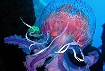 The beautiful OCEAN! / by Heather Pedersen