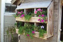 Garden / Garden and outdoor / by Missy Johnson